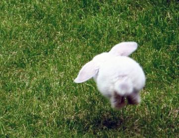 Happy Bunny Edit
